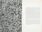 1959 Broeklundian page 10