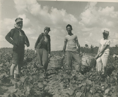 Beans Picking and Packing