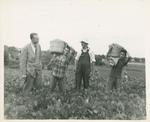 Harry Gideonse Looks on as Students Farm