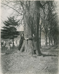 Two Students Encircling a Tree