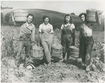Four Top Pickers