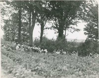 Field Scenes