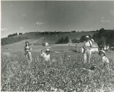 Field Scenes 2