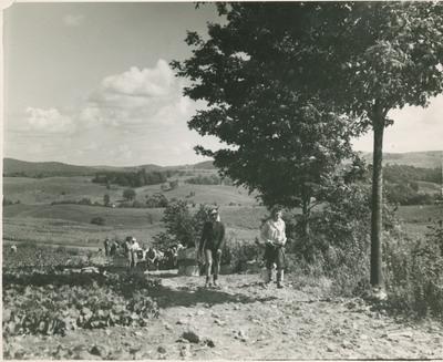 Field Scenes 4