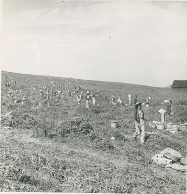 Field Scenes 5