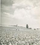 Field Scenes 6