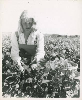 Student Picking Beans