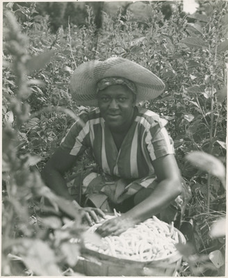 Worker Packing Beans