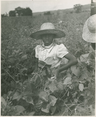 Young Child Picking Beans