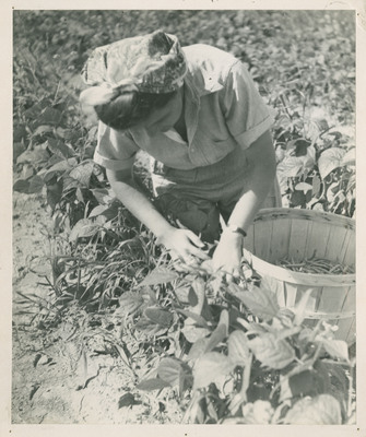 Student Picking and Packing Beans