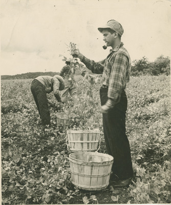Male Student Picking Crops