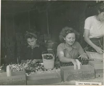 Packing Cherries