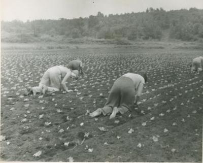 Planting Lettuce 2