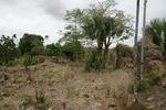 Sanate Colonial Sugar Estate