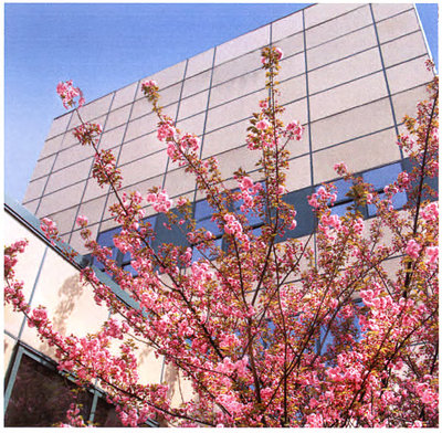 Spring Blossoms in E-Building Courtyard