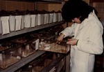 A Veterinary Technology Student Working with Mice by LaGuardia Community College